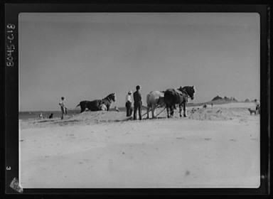 Beach scene with horses, Easthampton, Long Island