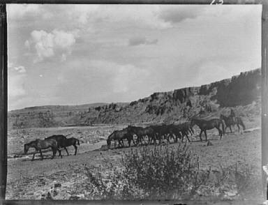 Herd of horses in Arizona or New Mexico
