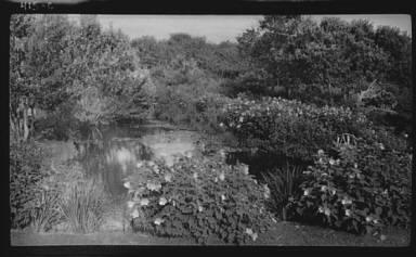 Bush's garden, Easthampton