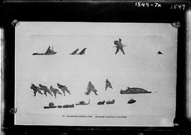 Walrus hunting in winter