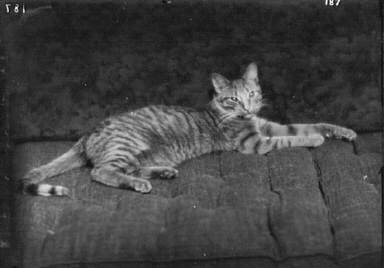 Buzzer the cat, portrait photograph
