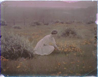 Helen MacGowan Cooke picking California golden poppies in a field