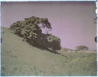California landscape of grass-covered hill and a large tree