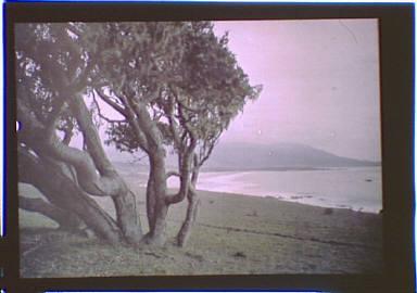 Seacoast in the Carmel, California area