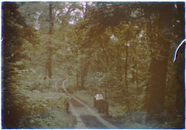 Man standing by the edge of a road through woods