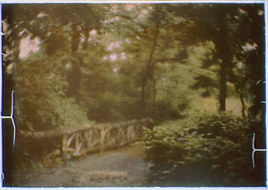 Road with a bridge in a wooded area