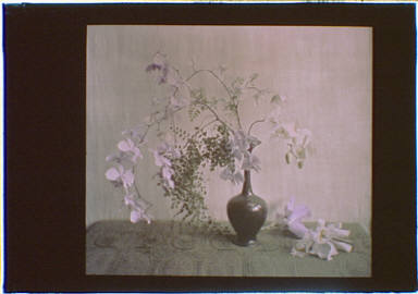 Vase containing white flowers