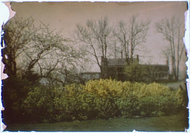 House behind bare trees