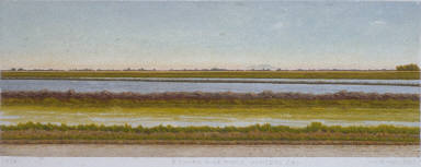A Young Rice Field, Winters, California