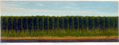 Corn Field with Sorghum Border, Sac Valley, August