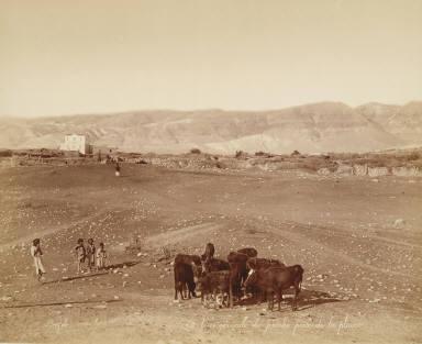 Vue générale de Jericho prise de la plaine