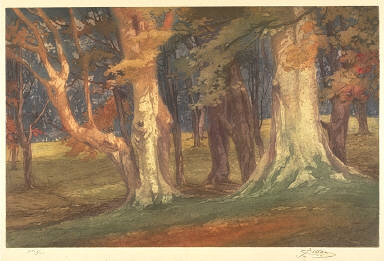 Beeches, Epping Forest