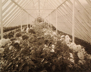 Interior View of Conservatory in Majors Hill Park