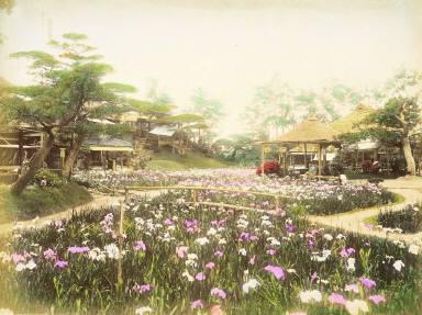 Iris Garden, Horikiri, Tokyo