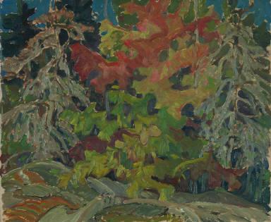 Algonquin Park Trees in Autumn