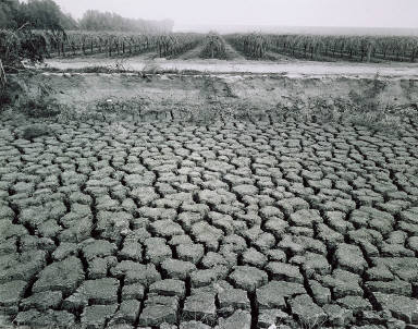 Cracked Mud and Vineyard near Arvin, California,from the Great Central Valley Project