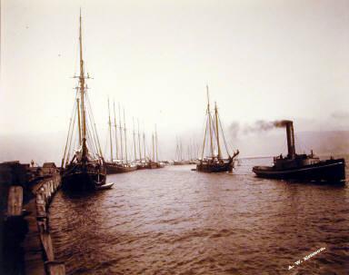 Arcata Wharf