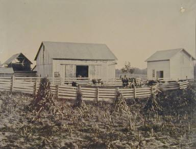 Farm Buildings and Corn Field