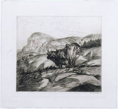 Cow and Rocks