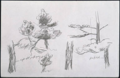 (Foliage Studies)