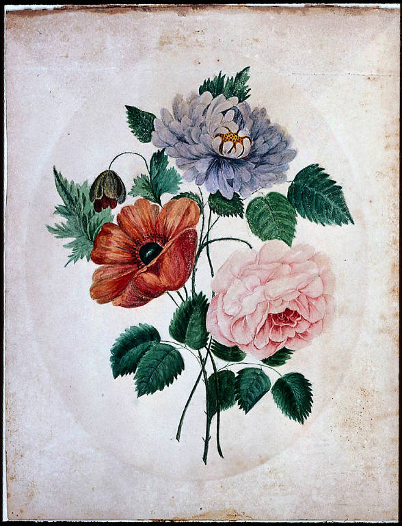 Aster, Poppy and Rose