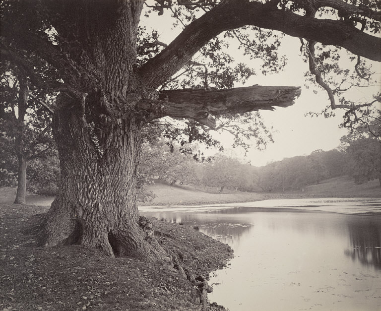 Tree on the Bank of a Pond, variant, probably at Thorndon Hall, Essex