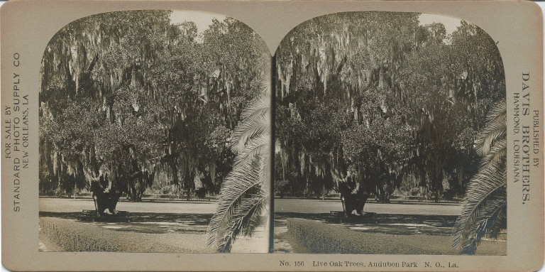 Live oak trees Audubon Park