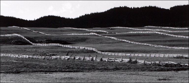 Fences Near Rimouski