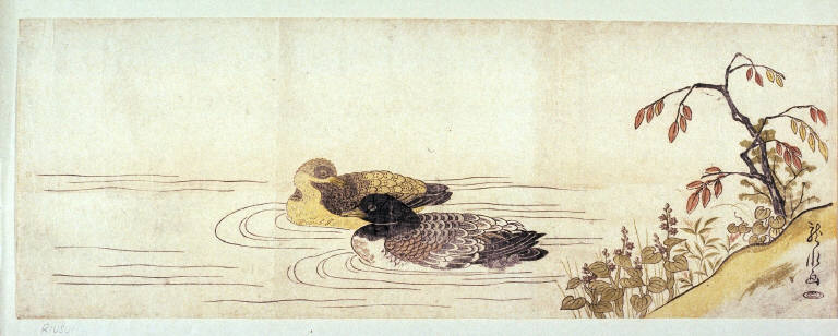 [Two ducks swimming past flowers]