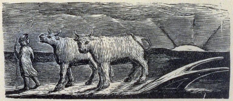 Illustration No.15: The Pastorals of Virgil by Robert John Thornton, Third Edition, London 1821;
