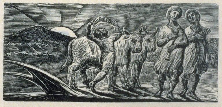 Illustration No.16 - The Pastorals of Virgil by Robert John Thornton, Third Edition, London 1821;
