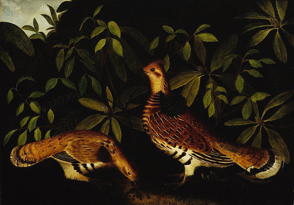 Two Ruffed Grouse in Underbrush