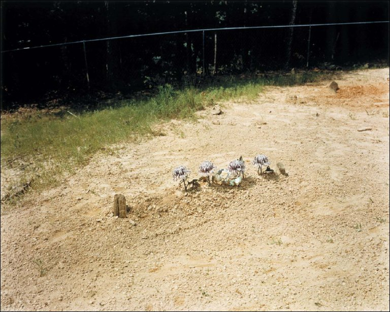 Child's Grave with Lavender Chrysanthemums--Hale County, Alabama