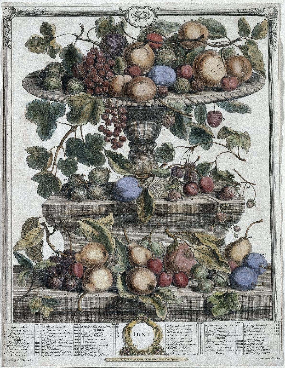 Twelve Months of Fruit: June