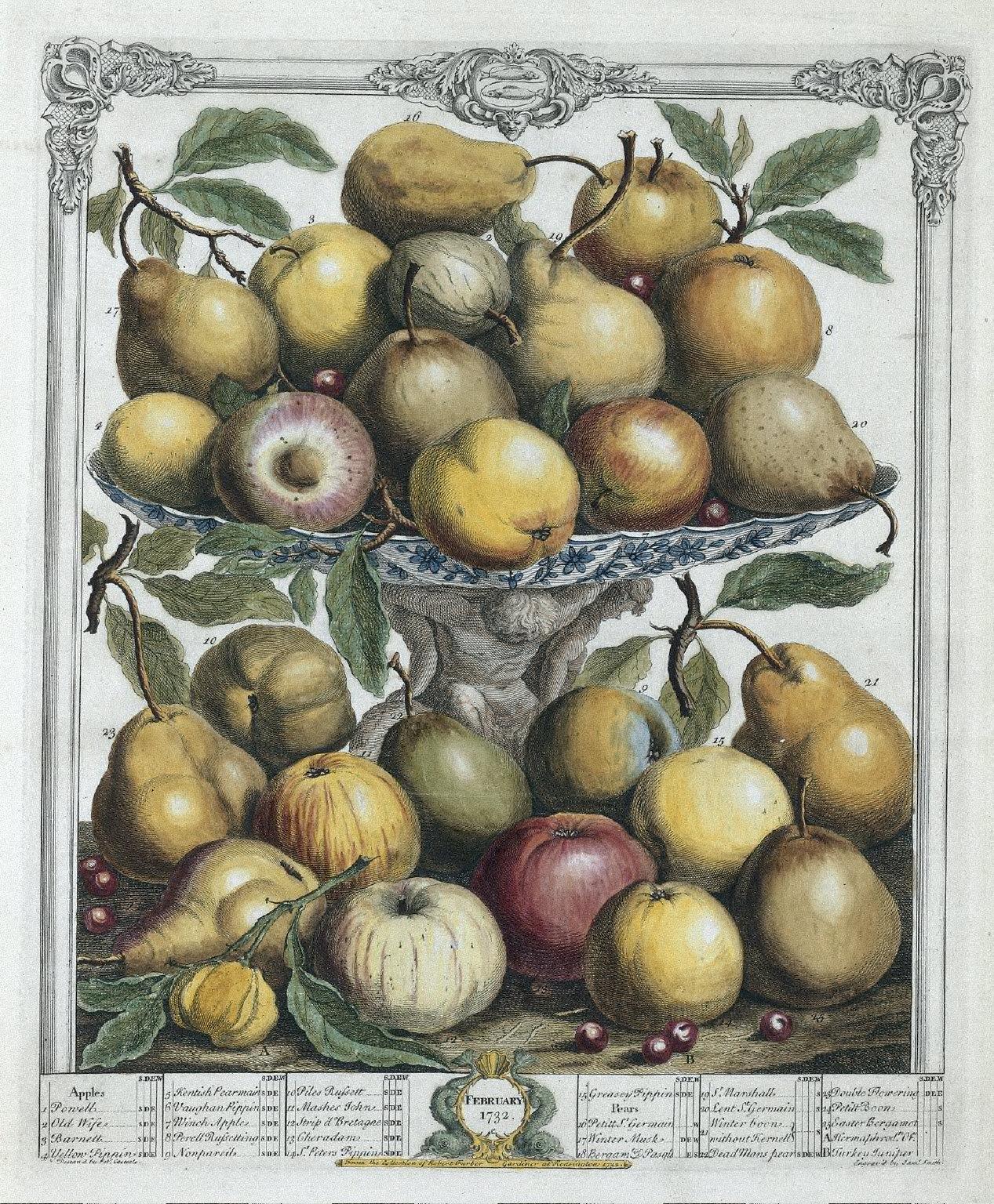 Twelve Months of Fruit: February