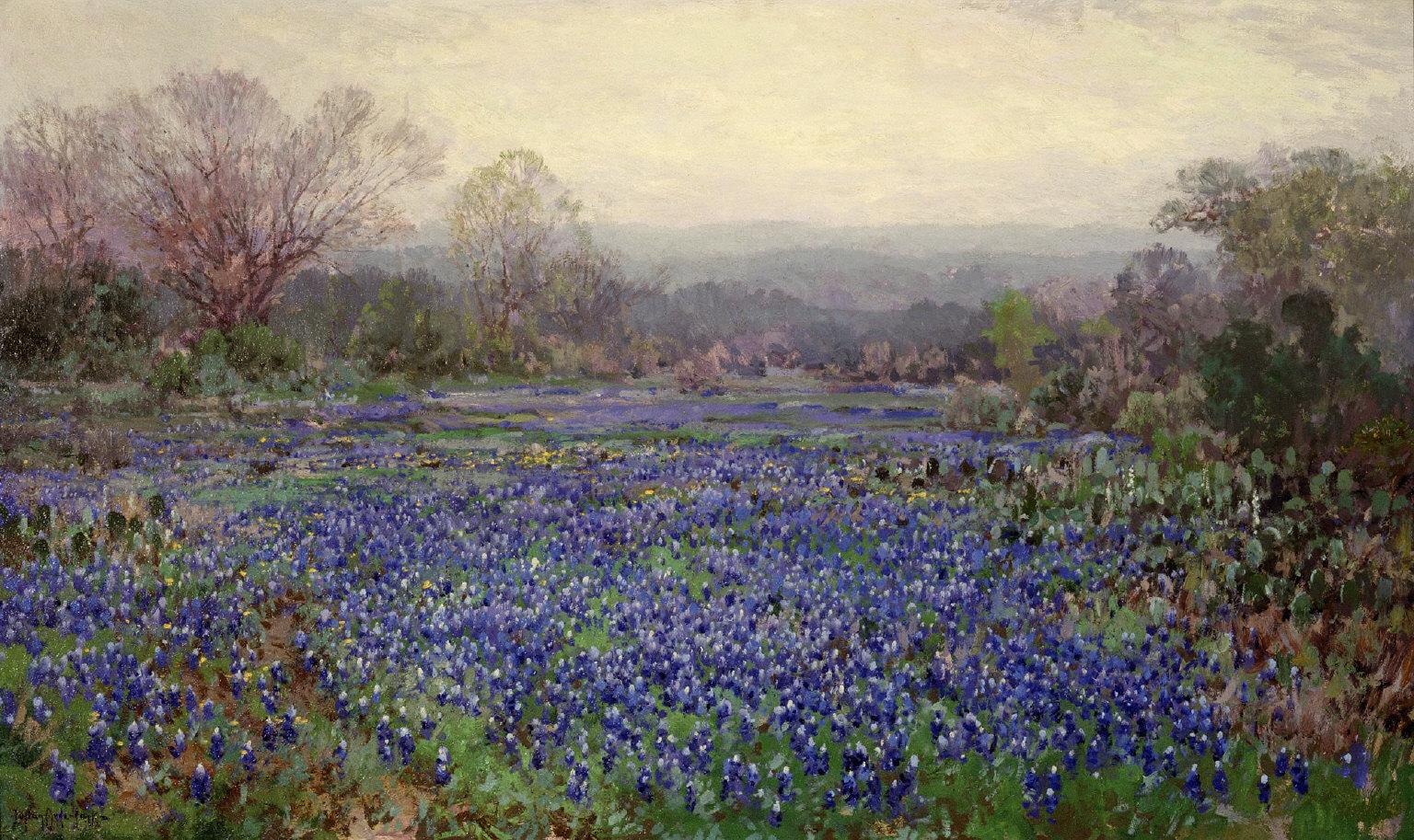 Untitled (Field of Bluebonnets)