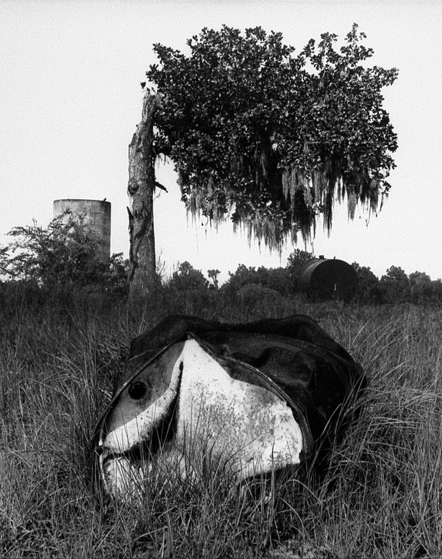 Tree & Drum