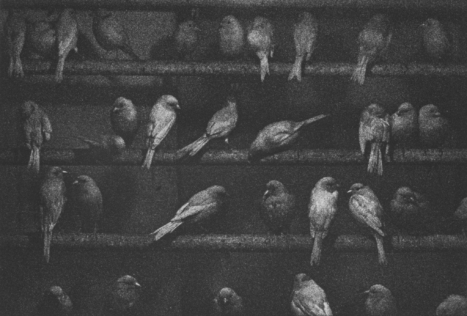 Birds, Mexico