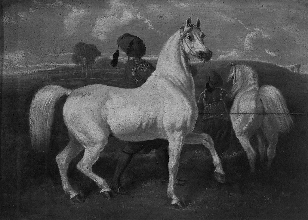 Arabian Horses