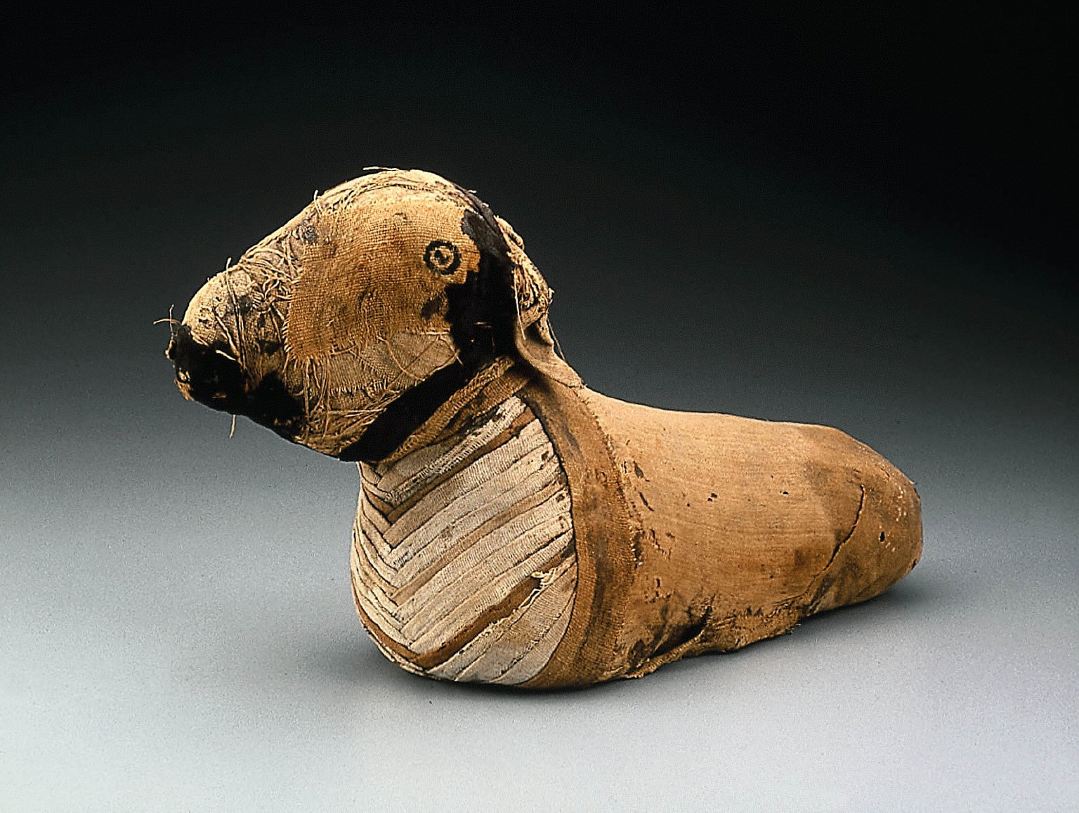 Mummy of a Ram