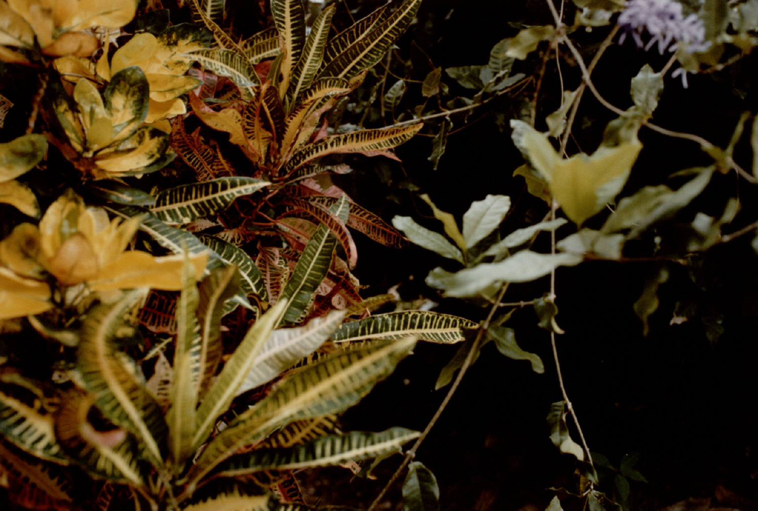 One of 10 photographs from the Jamaica Botanical series