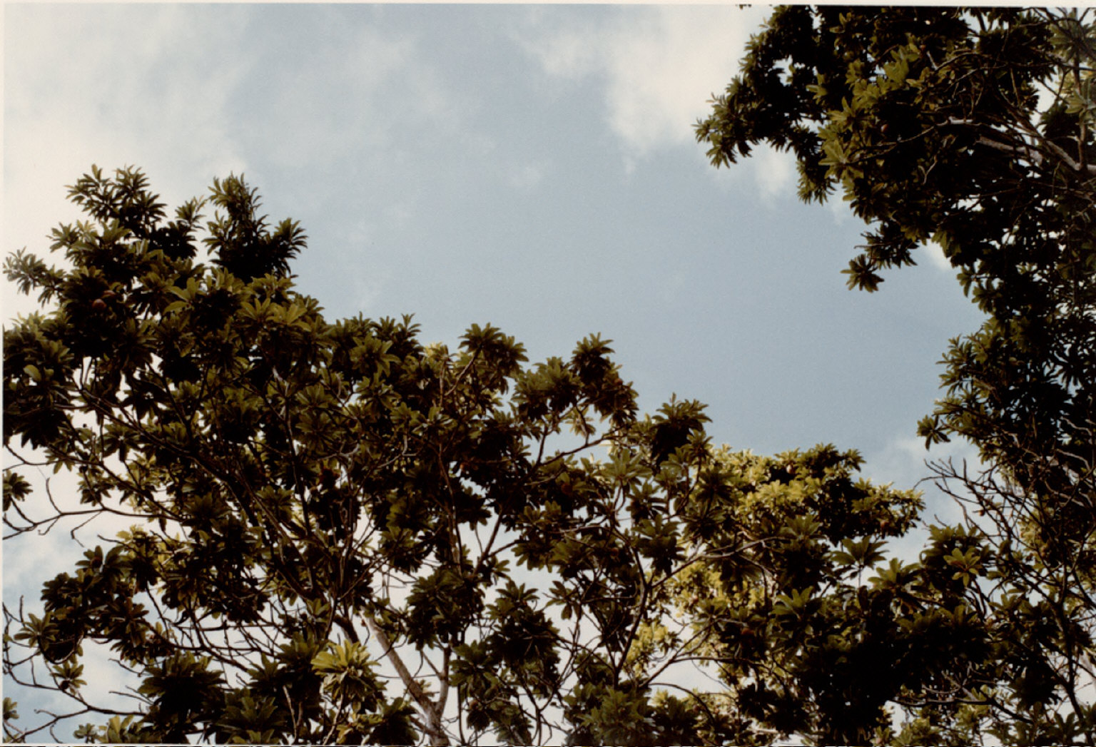 One of 33 photographs from the Jamaica Botanical series