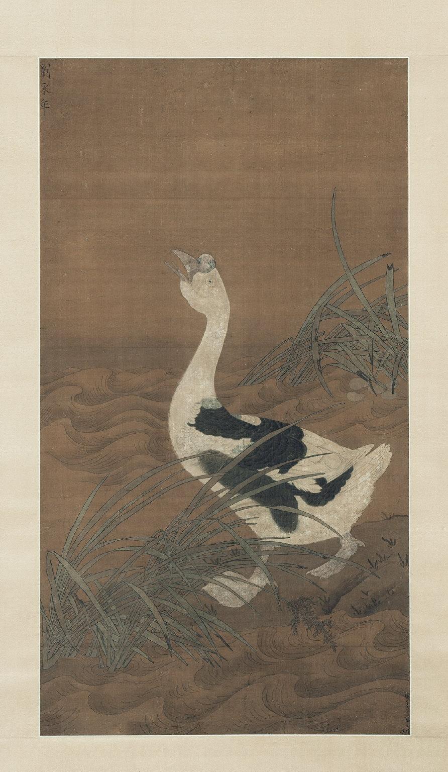 Swan Goose Amonng Water Reeds