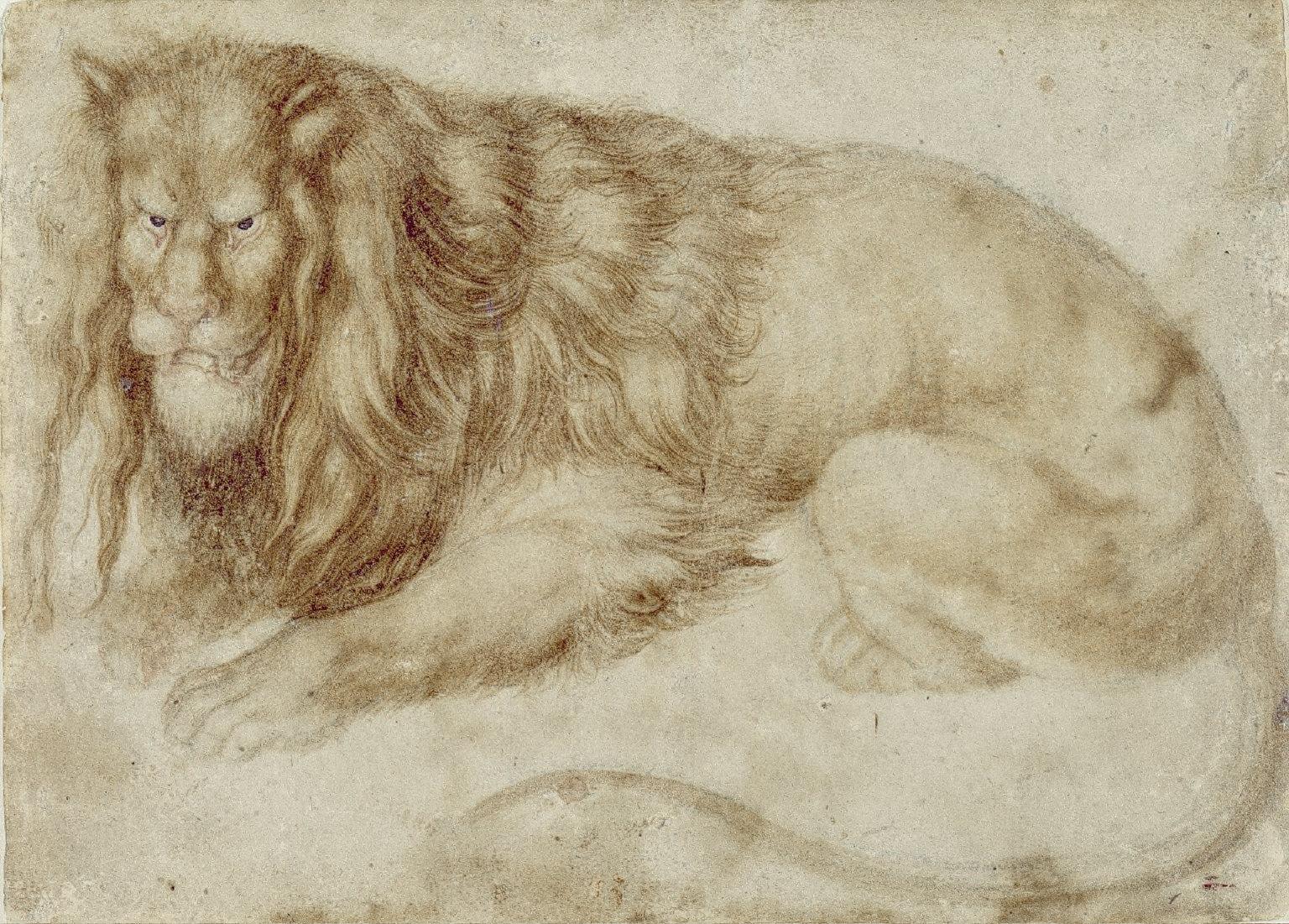 Recumbent Lion, c. 1494/1495