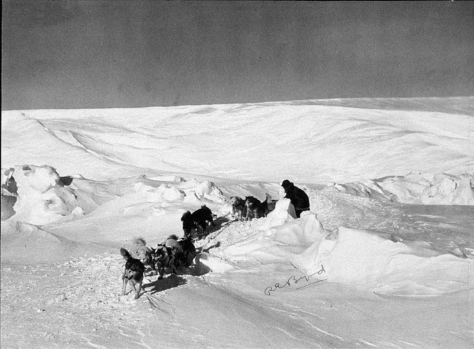 autographed view of man driving dog sled across barren winter landscape