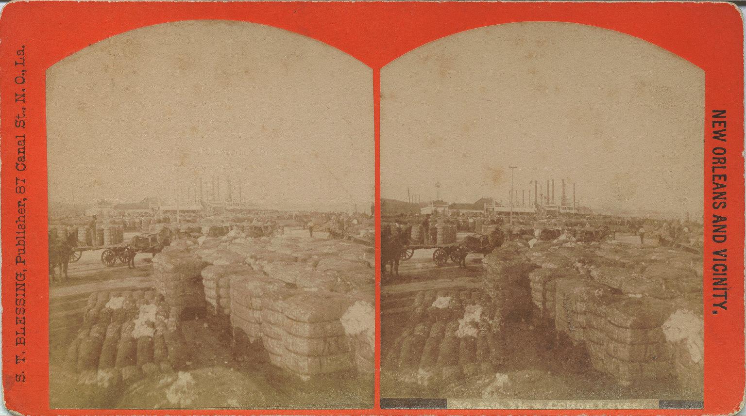 View cotton levee