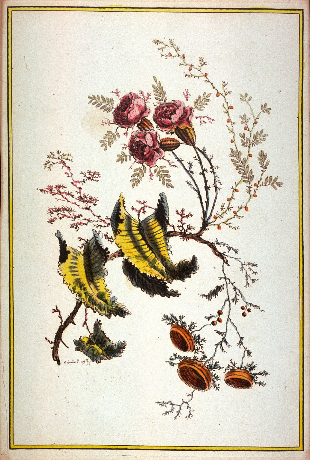 Untitled (botanical design fantasy)