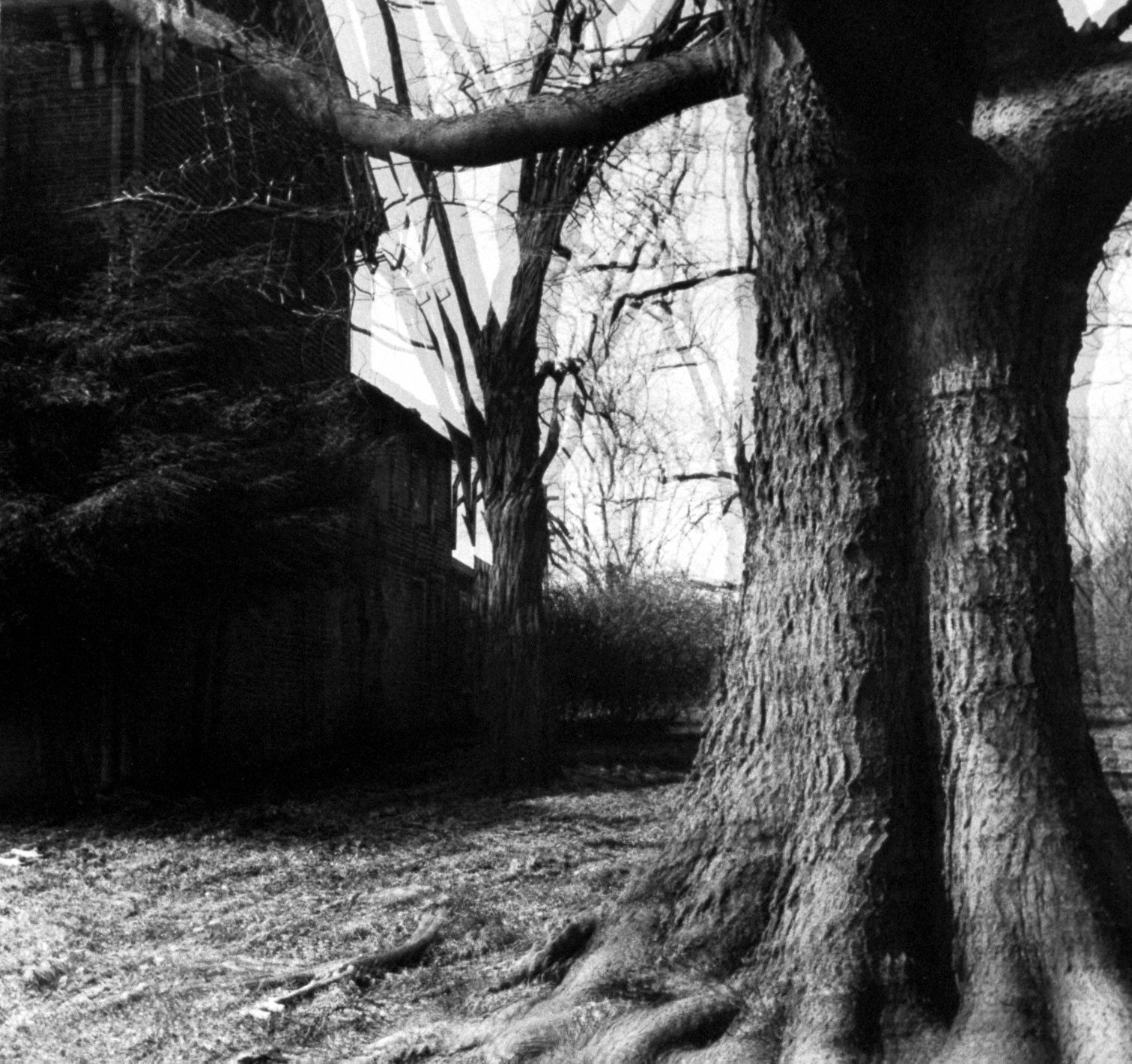 "Untitled (""Motion Sound"" Landscape)"