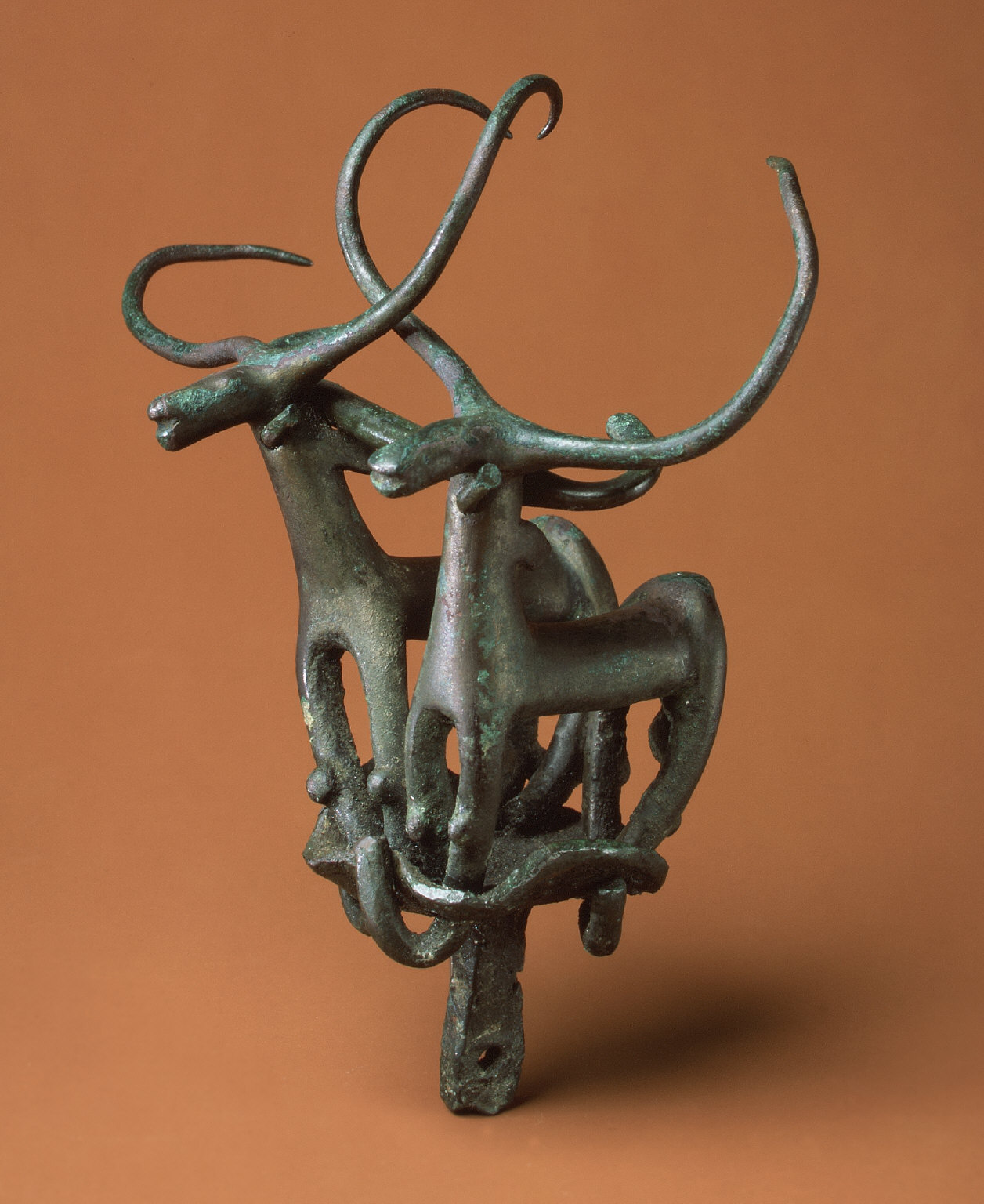 Standard with two long-horned bulls