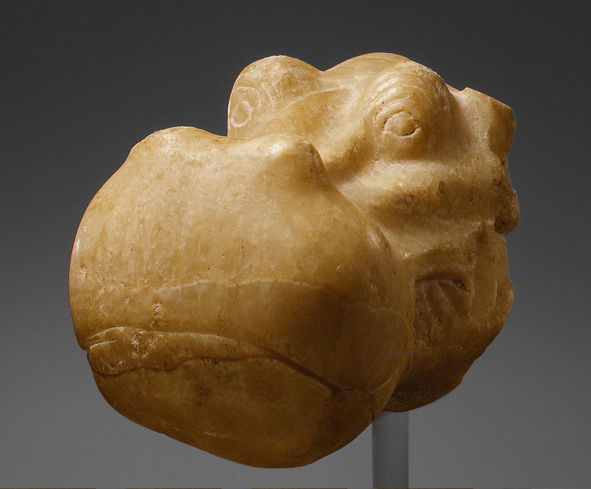 Head of a Hippopotamus